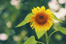 flower562_2