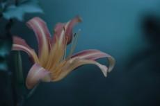 flower563
