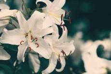 flower564-2