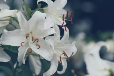 flower564