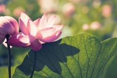 flower565-2