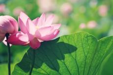 flower565
