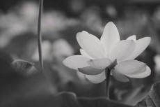 flower568-3