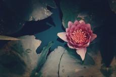 flower570-2