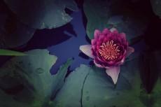 flower570