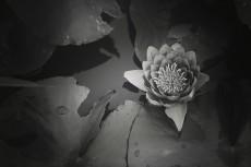 flower570-3