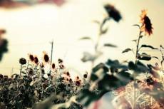 flower571-2