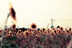 flower572-2
