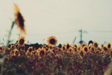 flower572
