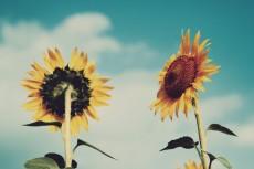 flower573