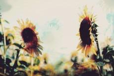 flower574