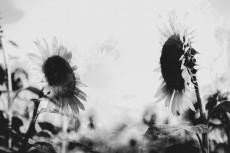 flower574-3