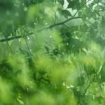 【高解像度】木々に降る雨(3パターン)