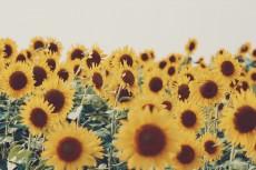 flower576-2