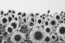 flower576-3