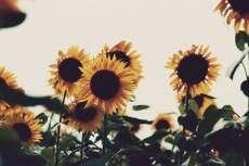 flower579