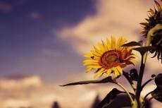 flower580-2