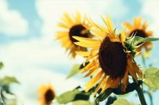 flower581