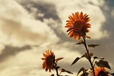 flower582-2