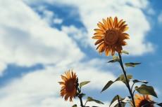 flower582