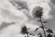 flower582-3