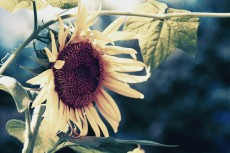 flower583-2