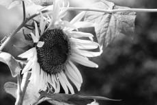 flower583-3