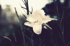 flower584-2