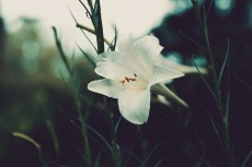 flower584