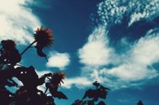 flower585-2