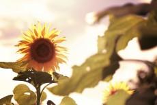 flower586