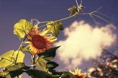 flower588-2