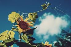 flower588