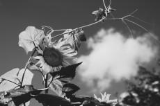 flower588-3
