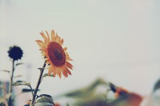 flower589-2