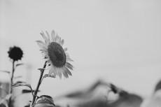 flower589-3