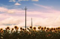 flower590-2