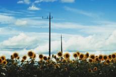 flower590