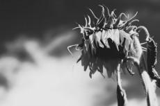 flower592-3