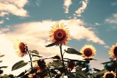 flower593-2