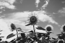 flower593-3