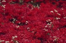 flower596-2