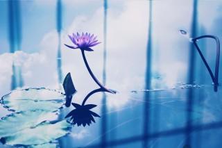 【高解像度】空と睡蓮(スイレン)(3パターン)