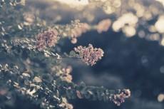 flower600-2