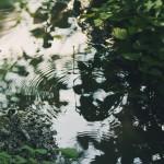 【高解像度】森の中の波紋(3パターン)