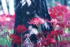 flower607
