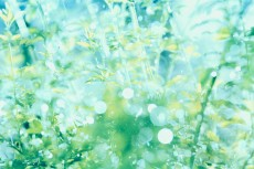 flower609-2