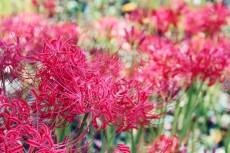 flower610