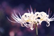 flower611-2
