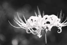 flower611-3